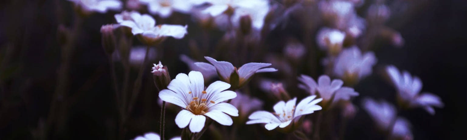 A close up of a flower at BellaDonna Inn.