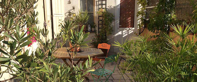 A plant in a garden at Maison Velvet.