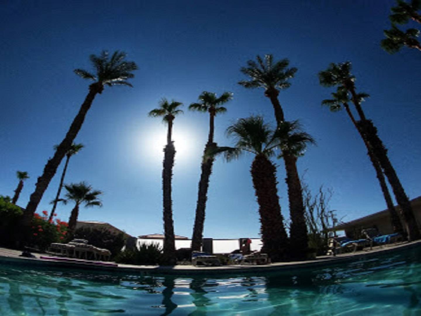 A group of palm trees at Lido Palms Resort & Spa.