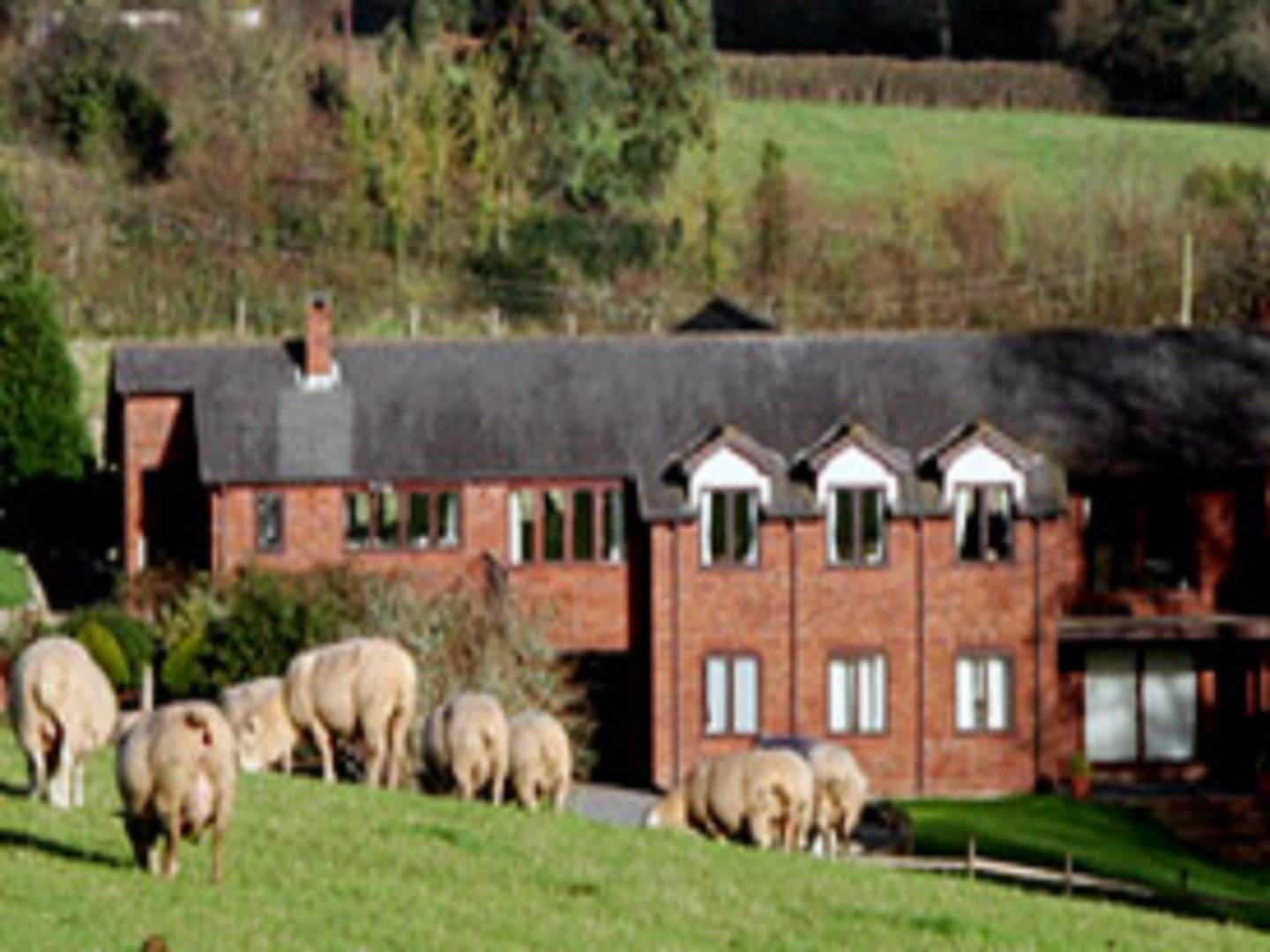 A herd of sheep standing on top of a building at Lower Thornton Farm.